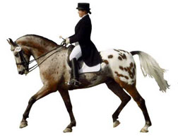 keys to winning horse dressage with equestrian hypnosis